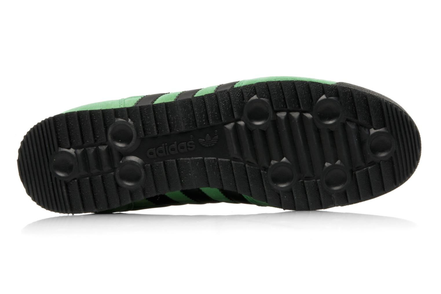 Dragon Twilight Green - Black 1 - Sun