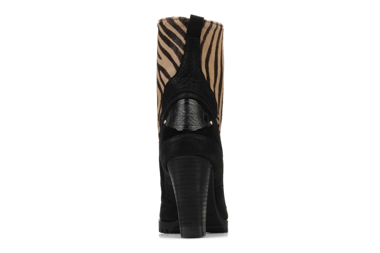 Norfolk Zebre et noir