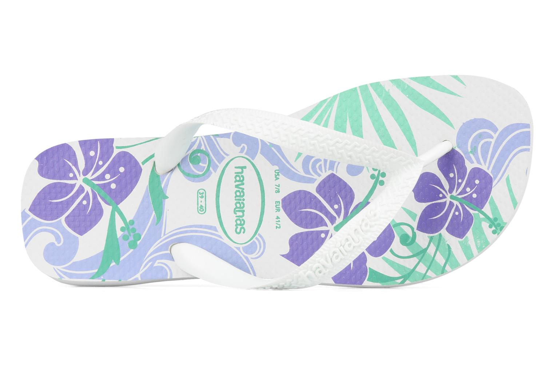 Hibisco White violet