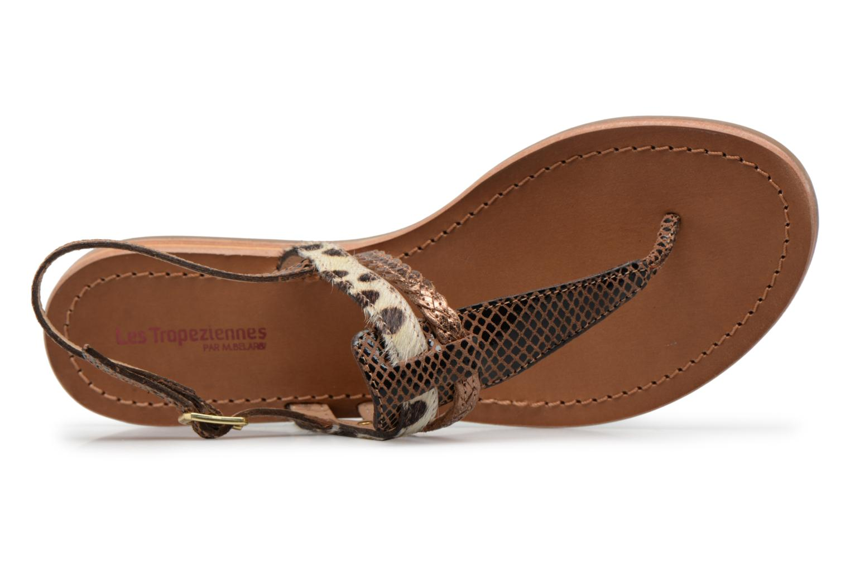 Baraka serpent léopard